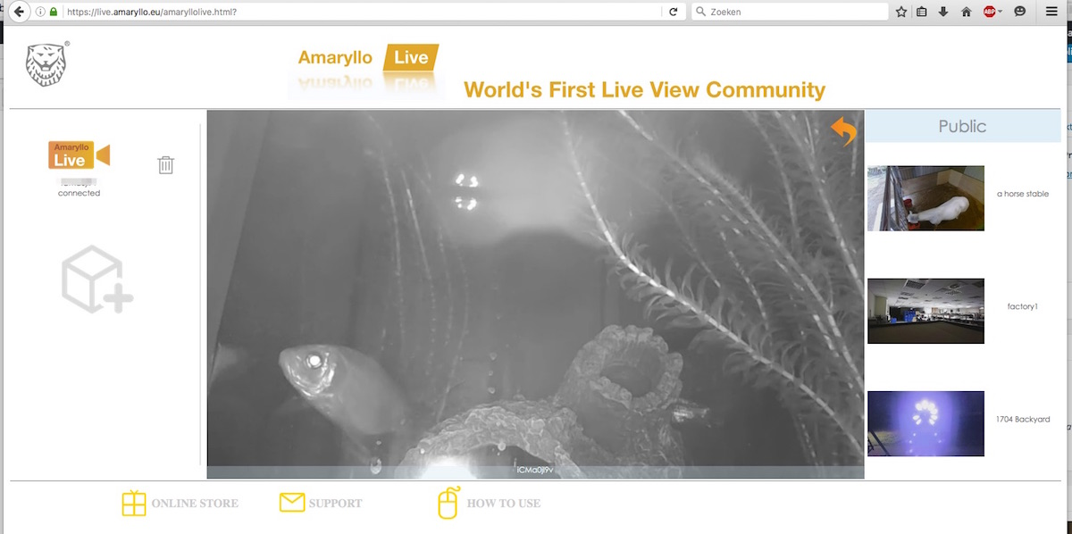 amaryllo livestreaming